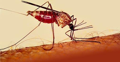 استفاده از پهپاد برای جلوگیری از شیوع مالاریا در تانزانیا