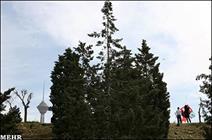 پیشرفت ۷۰ درصدی عملیات بهسازی رینگ اصلی بوستان پردیسان