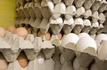 صادرات 59 میلیون تخم مرغ نطفه دار از آذربایجان غربی