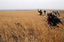 دنيا بھر ميں غذائی قلت میں مسلسل اضافہ ہونے پر اقوام متحدہ کا انتباہ