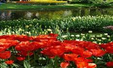 بهره برداری از باغ گل های کرمانشاه ظرف سه ماه آینده/دومین باغ گل کشور/بهره برداری از تقاطع غیر هم سطح امام حسین (ع) طی 7 روز آینده