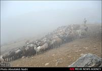 اتلاف ۳ هزار رأس دام در بارشهای اخیر اصفهان/قناتها آسیب دیدند