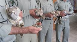 ۱۹۰ قطعه پرنده از قاچاقچیان حیات وحش در بانه کشف و ضبط شد
