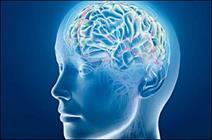 طبقهبندی تومورهای مغزی با تکنیکهای معمولی امکانپذیر نیست