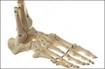 استخوان