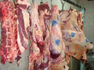 سالانه 14 هزار تن گوشت در دهلران تولید می شود