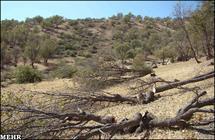 محیط زیست به عبور خط لوله گاز از پارک ملی دنا مجوز داد