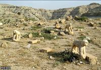 شیرهای سنگی دشت تاریخی کازرون در معرض انقراض کامل/ نمادهای دلاوری از پای درآمده اند
