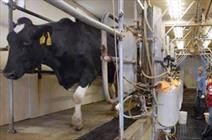 اصفهان رتبه نخست تولید شیر کشور را دارد/صادرات ۵ هزار تن شیر خشک برای نخستین بار