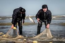 Rogue fishing costs world economy $10-23 bn.