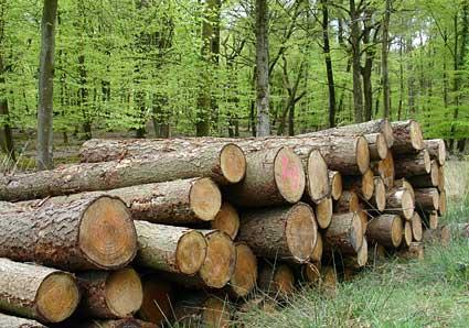 کشف و ظبط 40 الوار از گونه های جنگلی در شهرستان کردکوی