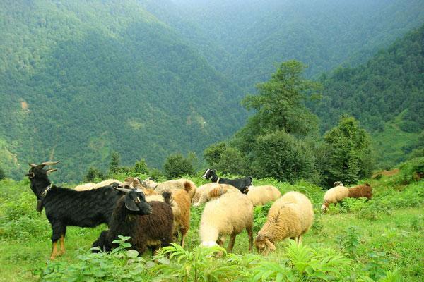 حصار جنگل ها را بردارید