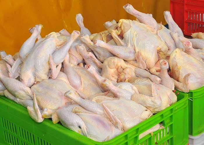 خریدار مرغ منجمد و گرم بصورت عمده در تهران