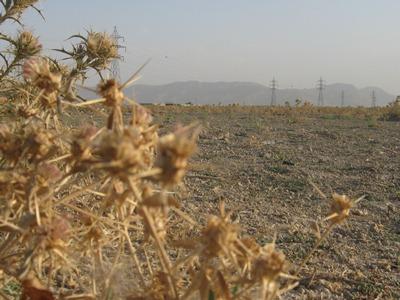 مصاحبه دیگری از امام جمعه بخش قهدریجان در دفاع از کشاورزان منطقه