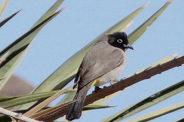 Image result for پرنده ای که با قفس پرواز کرد