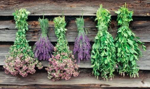 نتیجه تصویری برای کشت گیاهان دارویی