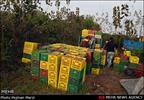 تولیدکنندگان و صادرکنندگان مظلوم واقع شده اند