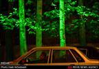 نورپردازی درختان خیابان ولیعصر تهران